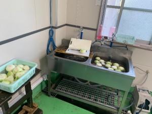 玉ねぎ加工作業1